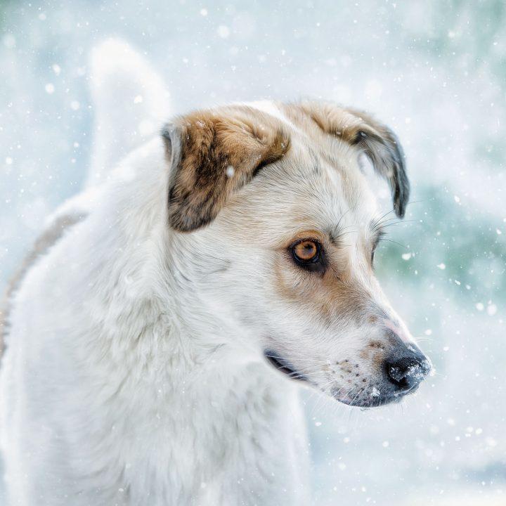 Aaron: Vom Straßenhund zum Fotomodel
