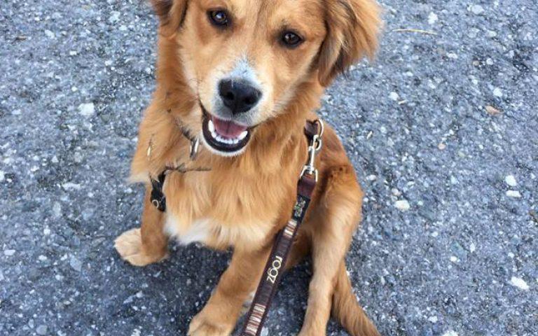Klein Jasper wird adoptiert