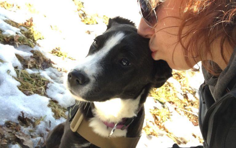 Ella… vom Streuner zum Rettungshund