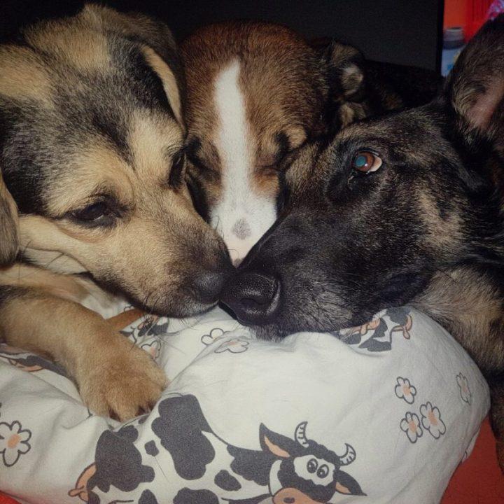 Liza: Vom Ketten- zum Familienhund