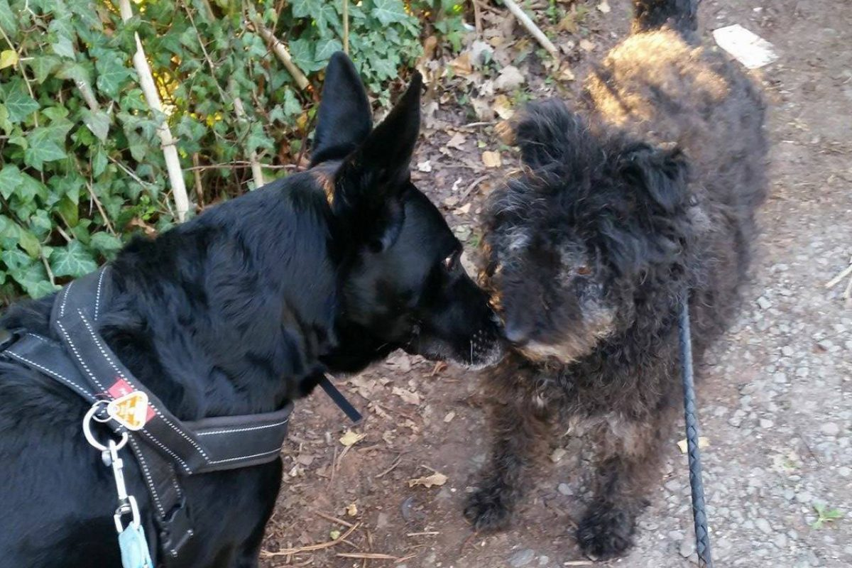 Happy End für Hundeopa Lukas