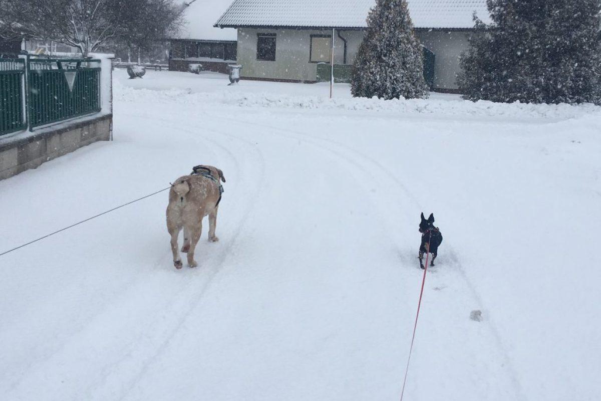 Hundeopa Rexi findet endlich ein Zuhause