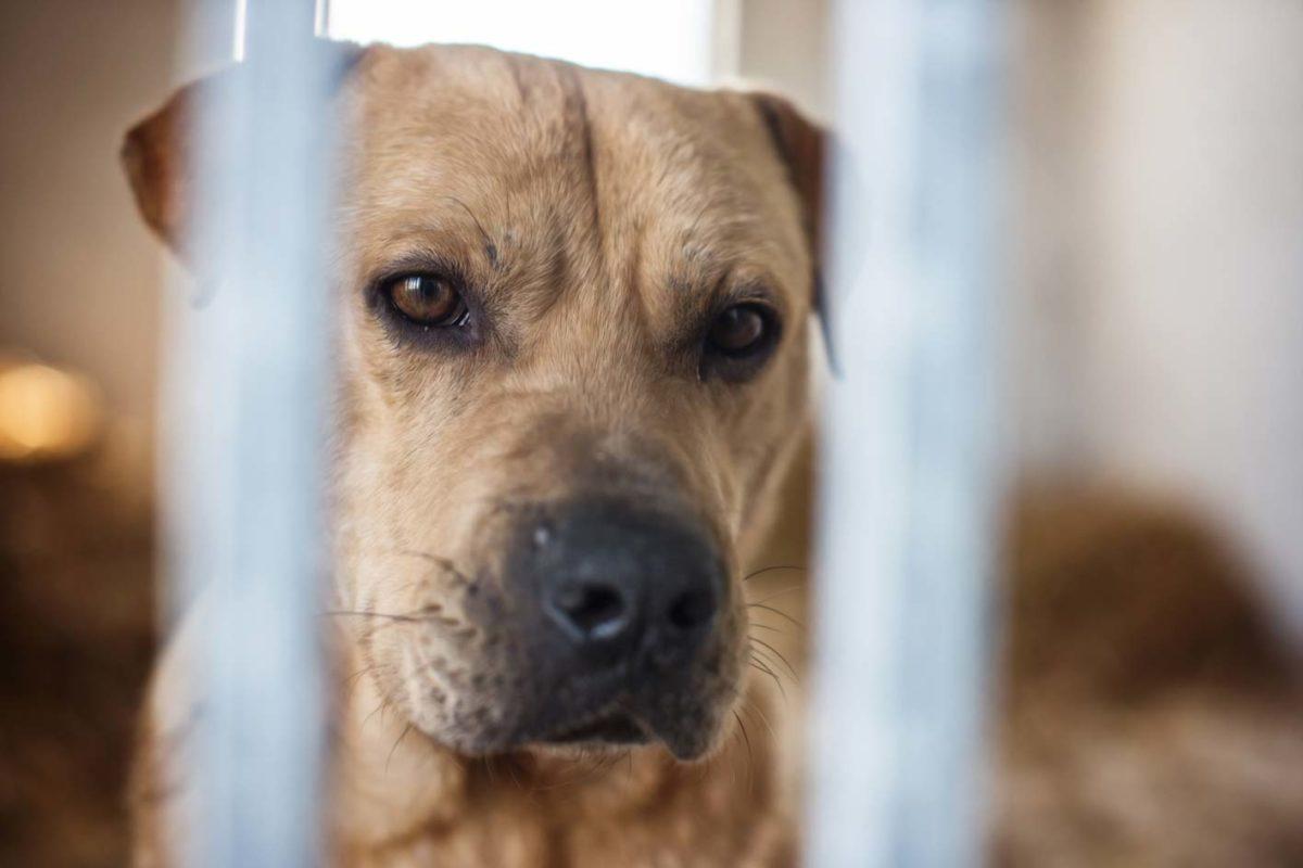 Corona-Krise auch für unsere Hunde!!