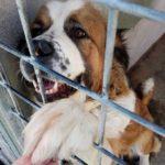 Große Rettungsaktion für ausgesetzte Hunde!