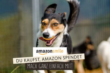 Amazon Smile Streunerparadies, Amazon spenden, Amazon Streunerparadies