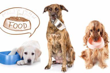 streunerparadies Futterspende, Futtersponsor werden, Futterspende Tierheim, Heilkraft