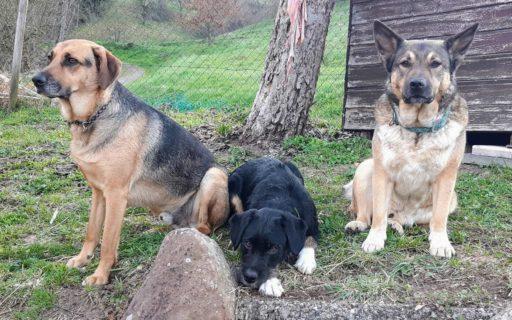 Drei Streuner, eine Familie!