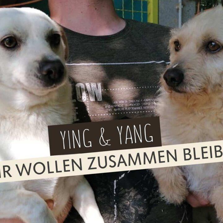 Ying & Yang: Mama und Sohn suchen gemeinsam eine Familie